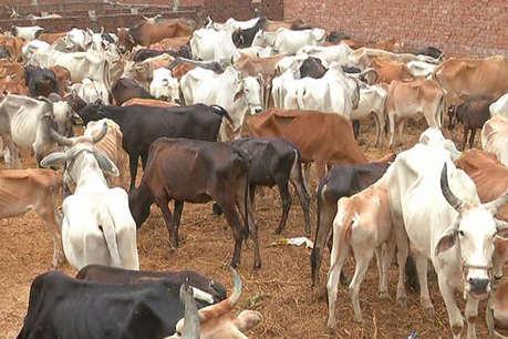 प्रयागराज: गौशाला में 35 गायों की मौत पर सियासत शुरू, जांच के आदेश