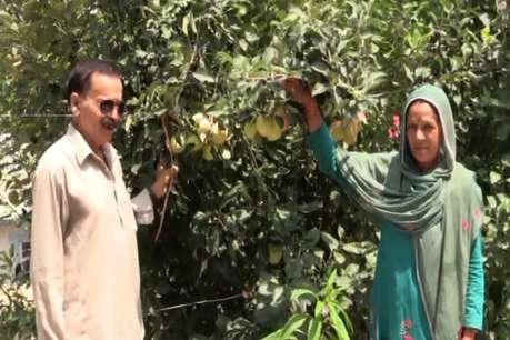 गर्म क्षेत्र में सेब की ली बंपर पैदावर, श्यामलाल ने पेश की मिसाल