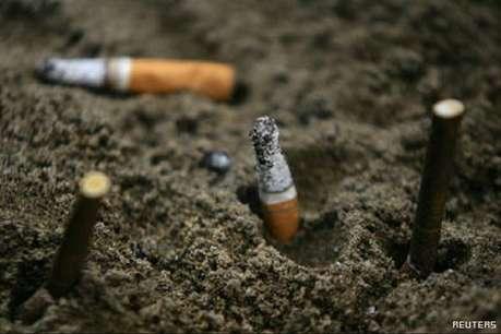 आप सिगरेट पीकर फेंक देते हैं, तो ऐसे कुपोषित होते हैं पौधे