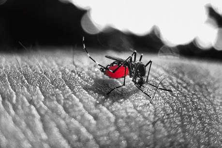 डेंगू की खतरनाक स्टेज में मरीज में दिखते हैं ये लक्षण