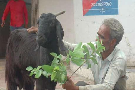 1 बकरी पर 2 लोगों ने जताया दावा, थाने पहुंचा मामला, 1 महिला गिरफ्तार