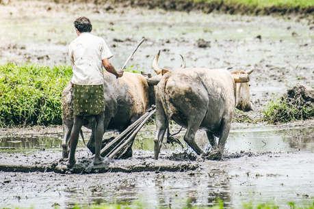 कौन कहलाएगा किसान और किसे मिलेगा खेती-किसानी से जुड़ी इन योजनाओं का लाभ?