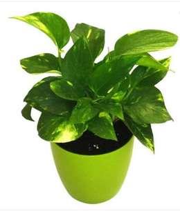खालसा कॉलेजों के हर छात्र को लगाने होंगे 10 पौधे, वार्षिक परीक्षा में मिलेंगे अंक
