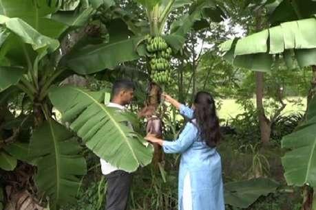 लाखों की नौकरी छोड़कर भारत लौटा कपल, पर्यावरण के लिए कर रहे हैं ऑर्गेनिक खेती