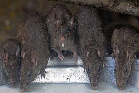 2 माह के बच्चे को मां ने मरने के लिए चूहों के बीच छोड़ा, 10 साल बाद आई याद