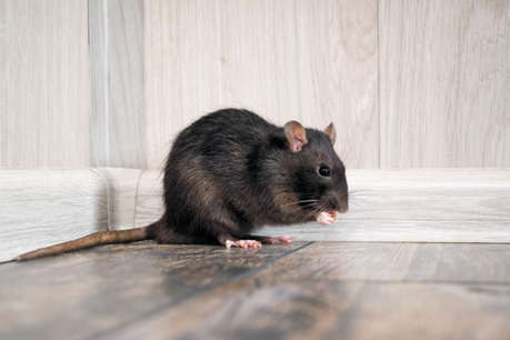 बस्तर के महारानी अस्पताल का हाल, यहां चूहे खा रहे मरीजों का खाना
