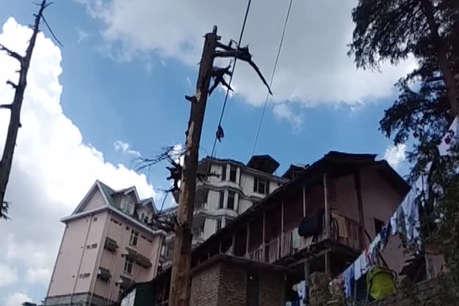 बरसात से ठीक पहले फिर जागा शिमला नगर निगम ट्री कमेटी, करेगी ये काम