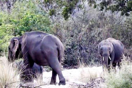 रुद्रपुर पहुंचे दो नर टस्कर हाथियों का तांडव, एक व्यक्ति की ली जान