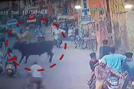 सांड ने पुलिसकर्मी पर किया हमला, सींग से उठाकर जमीन पर पटका