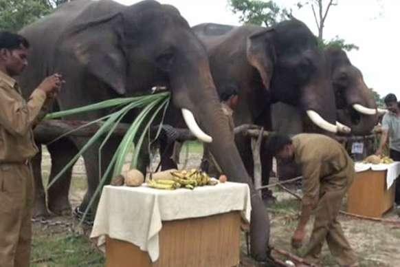 बाघों के घर में हाथियों की खुशामद