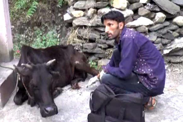 VIDEO: गायों की सेवा में हर वक़्त हाज़िर है लकी अली, लोग बोले- 'फर्जी रक्षक' लें सीख