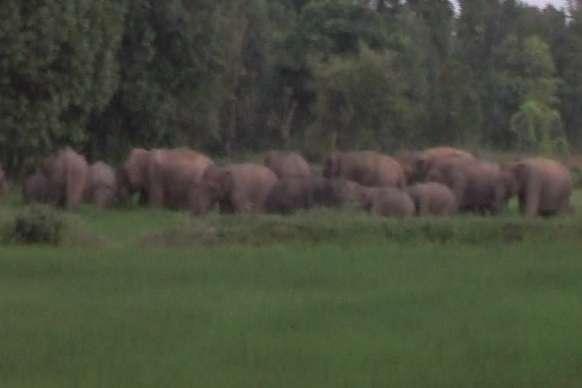 जब 73 हाथियों को एक साथ देख दहशत आए ग्रामीण