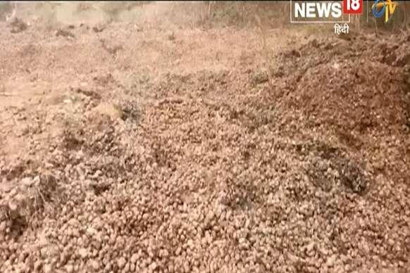 बरेली: किसानों ने हज़ारों कुन्तल आलू सड़क पर फेंका