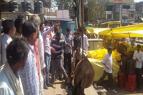 बजरिया में क्रेन से निकाली गई नाले मे गिरी गाय