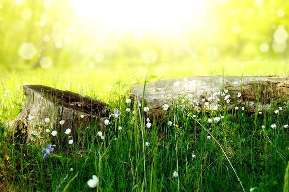 #Spirituality : हम जैसी संगत में रहते हैं, वैसे ही हो जाते हैं