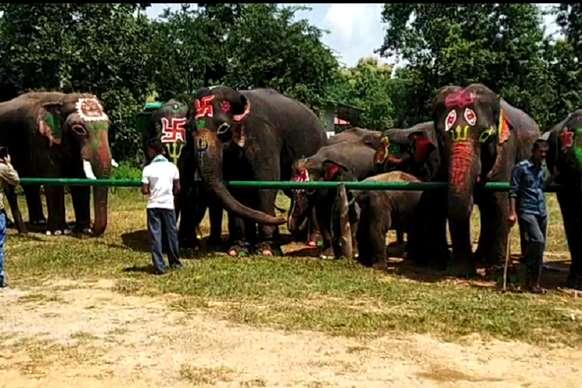 VIDEO: पन्ना टाइगर रिजर्व में हाथियों की पिकनिक, छक कर खाए पकवान