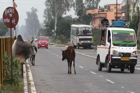 VIDEO: एनएच-125 पर दुर्घटनाओं का कारण बन रहे पालतू जानवर