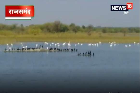 VIDEO: हर साल सर्दियों में राजसमंद पहुंचते हैं ये प्रवासी पक्षी