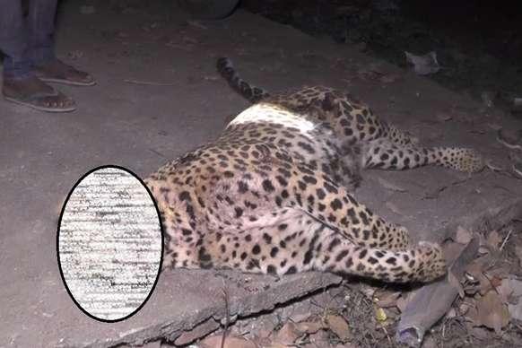 गढ़वा: तेंदुए के हमले में कई ग्रामीण जख्मी, लोगों ने गुस्से में तेंदुए को मार गिराया