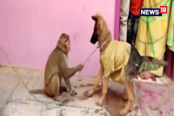 शरारती बंदर ने कुत्ते को जमकर छकाया, VIDEO वायरल