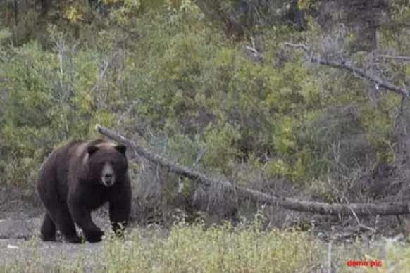 पति को बचाने के लिए जंगल में भालू से भिड़ गई पत्नी, फिर भी नहीं बचा पाई जान