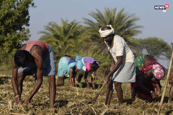 मॉनसून की बेरूखी ने बढ़ाई महासमुंद में किसानों की चिंता