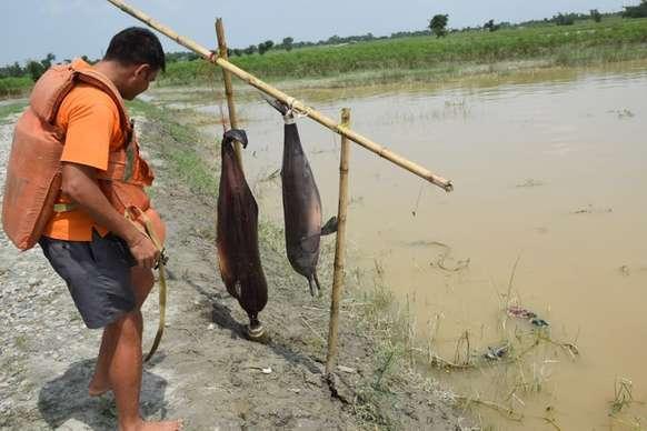 बिहार: इस वजह से मारी जा रहीं संरक्षित डॉल्फिनें