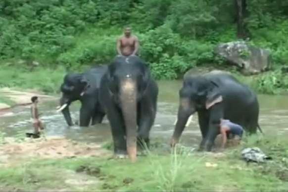 हाथियों की फौज है-मॉनसून में मौज है: पिकनिक पर निकले गजराज