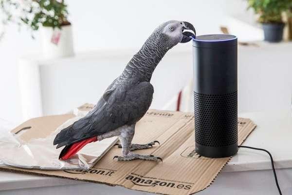 मालिक की आवाज़ निकाल कर इस तोते ने कर ली ऑनलाइन शॉपिंग!