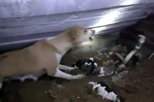 बच्चों को बचाने के लिए कोबरा से भिड़ी कुतिया