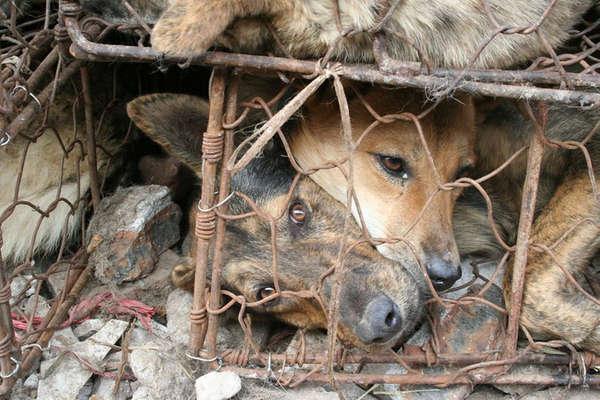 बेंगलुरु के होटलों में मटन की जगह परोस रहे कुत्तों का मांस!